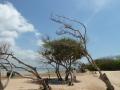 Strand Bäume Sturm Volli