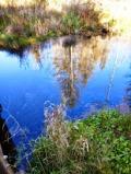 natur gespiegelt