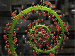 Pflanze Spirale Blume