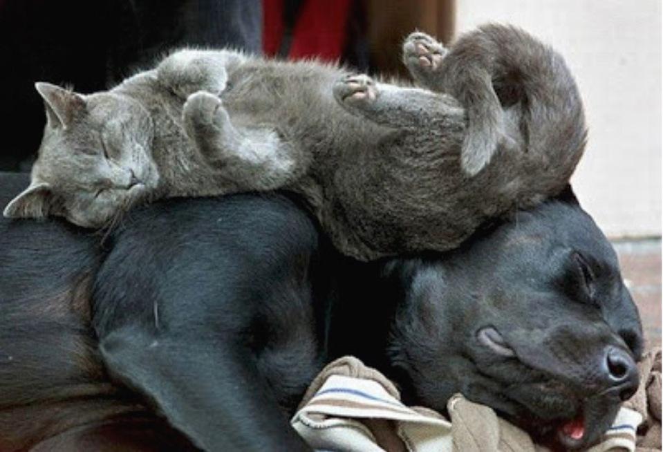 Katze Hund Schlaf Freunde