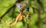 Vogel und Kind