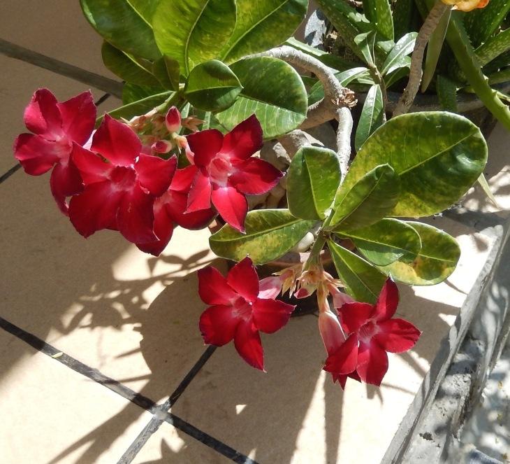 Blume Natur