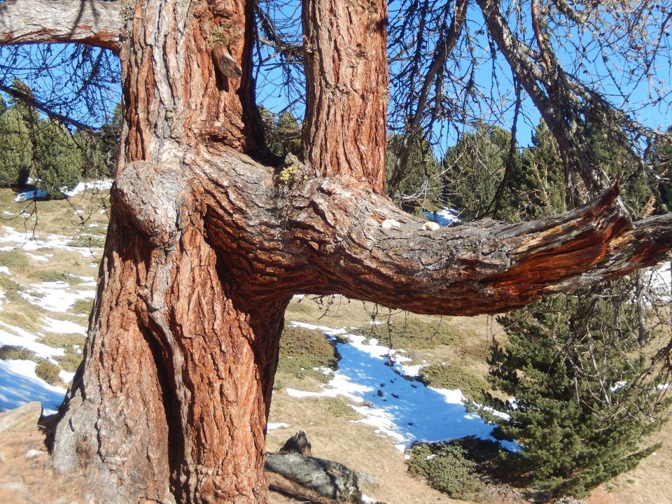 Baum Tirol Natur