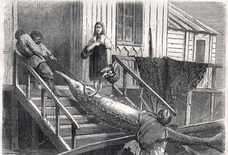 don-fisch 1867