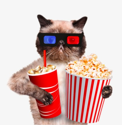 cat-popcorn-and-drink