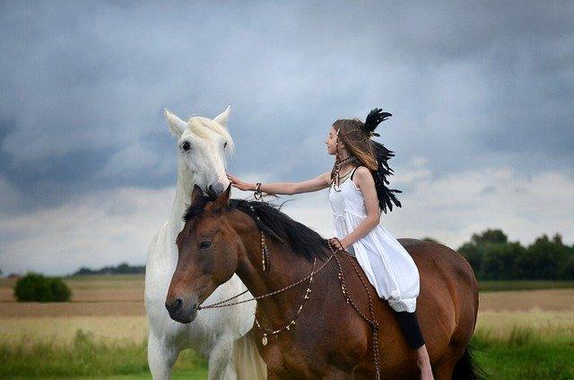 horse-3791944_640